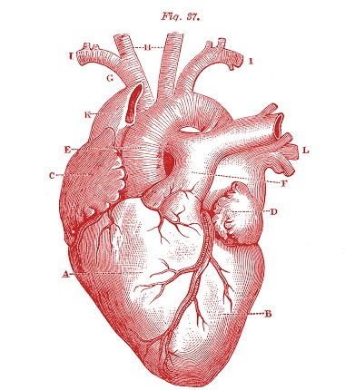 What's Behind Your Racing Heart?